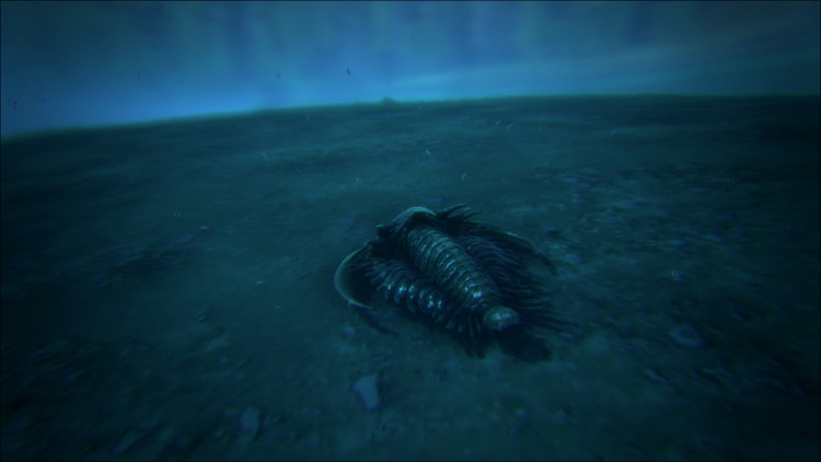 The Trilobite is a decent source of small quantities of Oil in Ark. It is also the safest method of harvesting Oil.